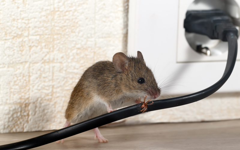 MS SERVICES - Dératisation à Fontenay-sous-Bois - Dératisation rats - Dératisation souris - Particuliers - Professionnels - 24H/24 - 7J/7 - 06 46 02 29 82